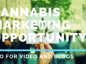 explainer for cannabis digital growth strategy with leaf in hand.